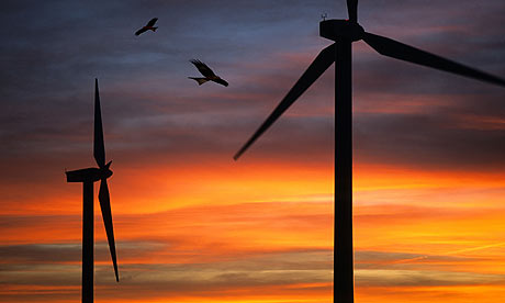 Bats, birds and wind turbines