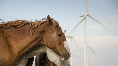 wind energy horses