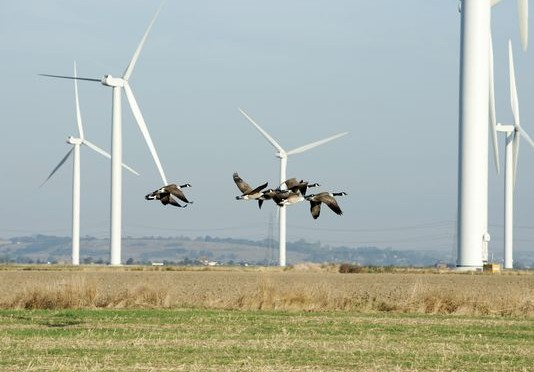 Wind energy helps protect wildlife by reducing carbon pollution