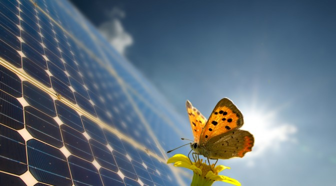 Butterfly-inspired technique could make photovoltaic solar energy cheaper
