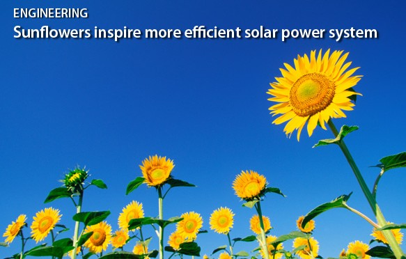 Sunflowers inspire more efficient solar power system