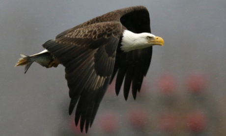 FWS eagle take permit applies to number of different industries