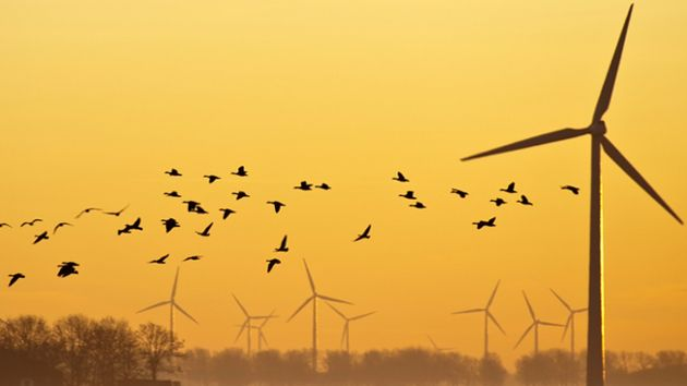 Wind turbines aims to limit harm to birds