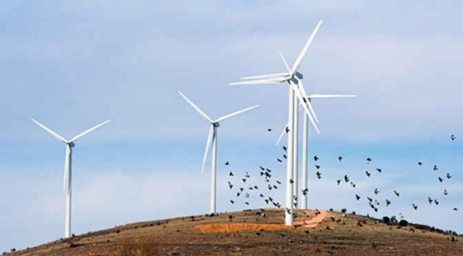 Wind energy is better for birds in the long run