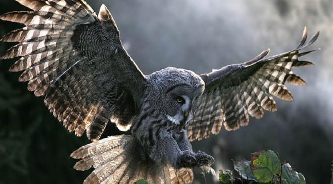 Owls inspire 'quieter' wind turbines