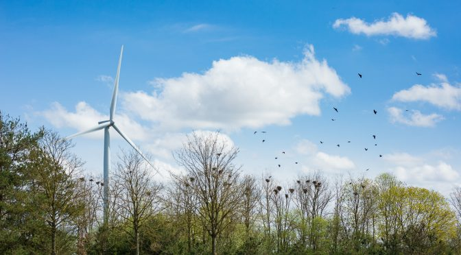 EU Biodiversity Strategy goes hand in hand with energy transition
