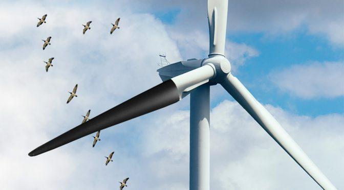 Black paint on wind turbines helps prevent bird deaths