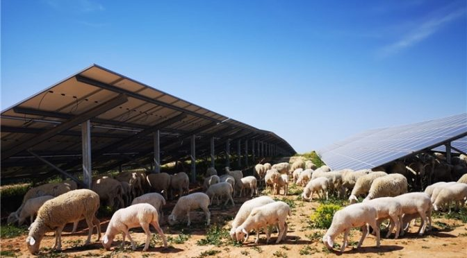 Iberdrola puts its first photovoltaic plant in Teruel into operation